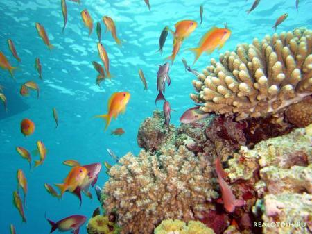 Дайвинг и рыбалка на Сейшельских островах
