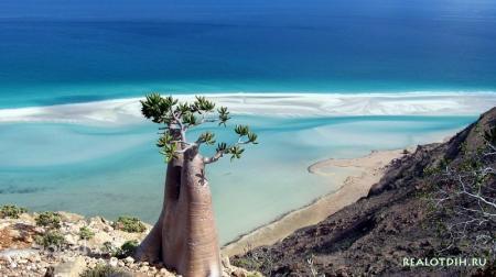 Йеменский остров Сокотра